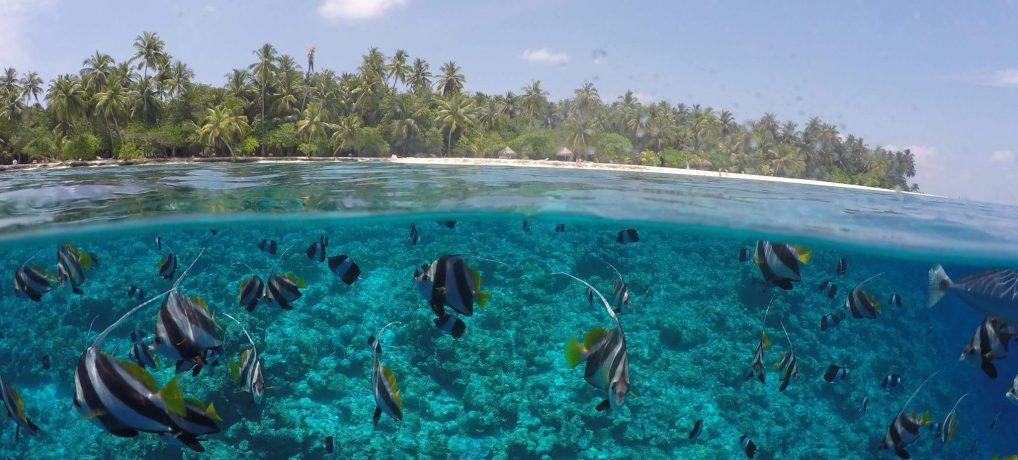 GoPro Video: Malediven 2016