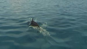 Delfine und noch mehr