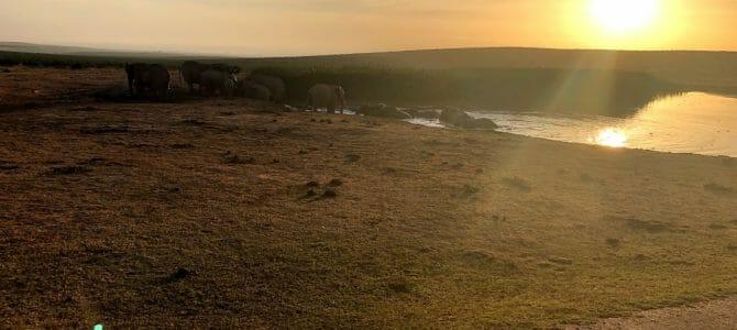 Video: Südafrika 2018